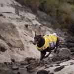 comprar chaleco salvavidas para perros kayak
