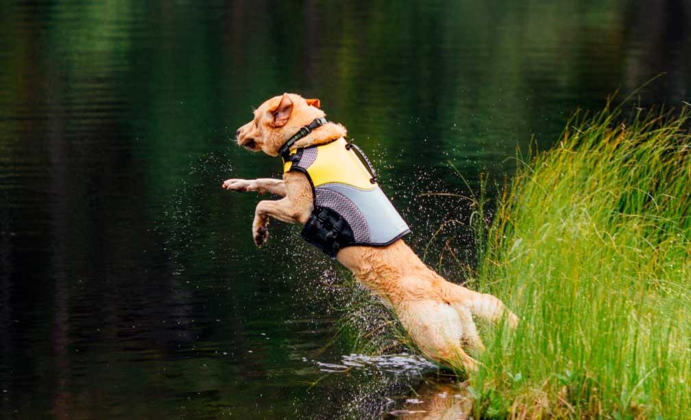 mejor chaleco salvavidas para perros