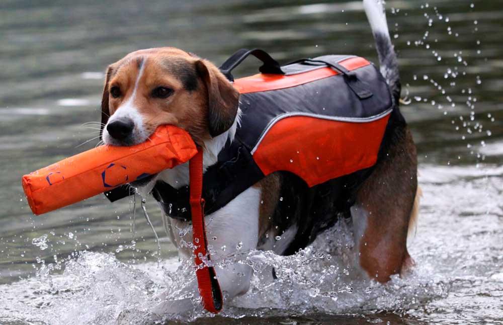 perro jugando en el agua kayak seguridad