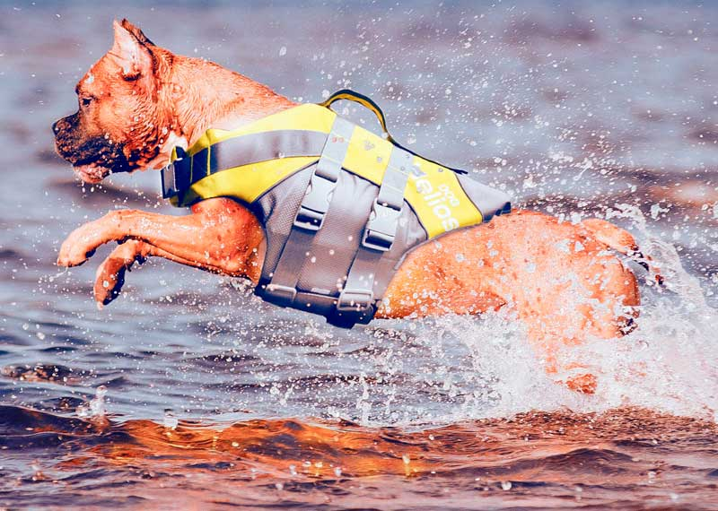 chaleco para kayak con perros