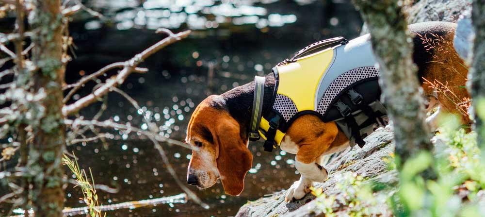 Perro kayak chaleco arnés salvavidas