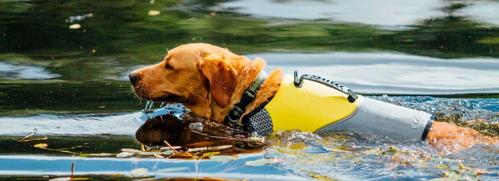 chaleco salvavidas para perro actividad kayak