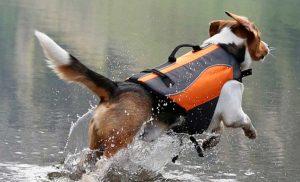 chaleco salvavidas kayak perro