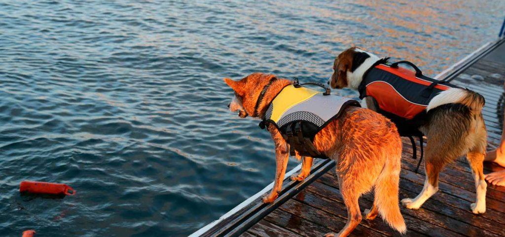 actividades acuáticas con perro