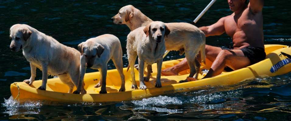 perros en kayak autovaciable