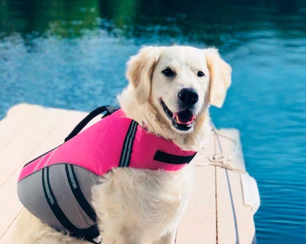 mejor chaleco para kayak con perros