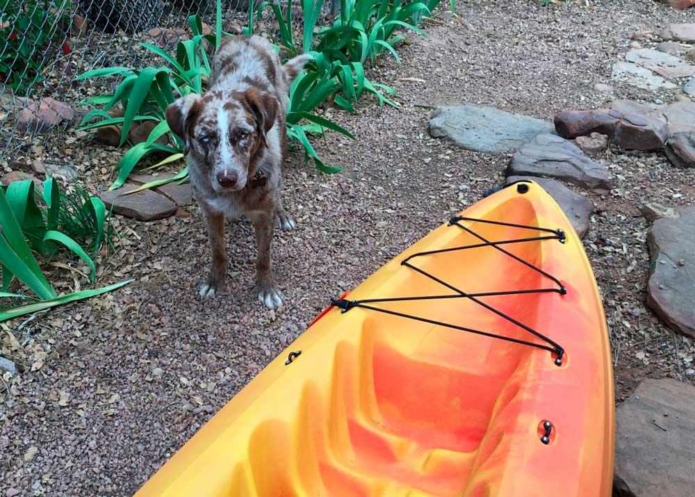 entrenar kayak con perro pantano